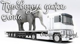 Компания «Слоновоз»